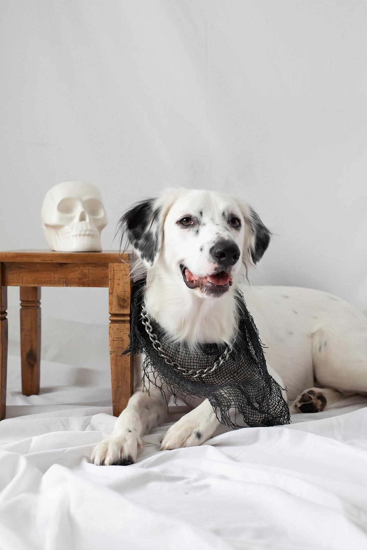 Diy No Sew Halloween Dog Bandana Ctrl Curate